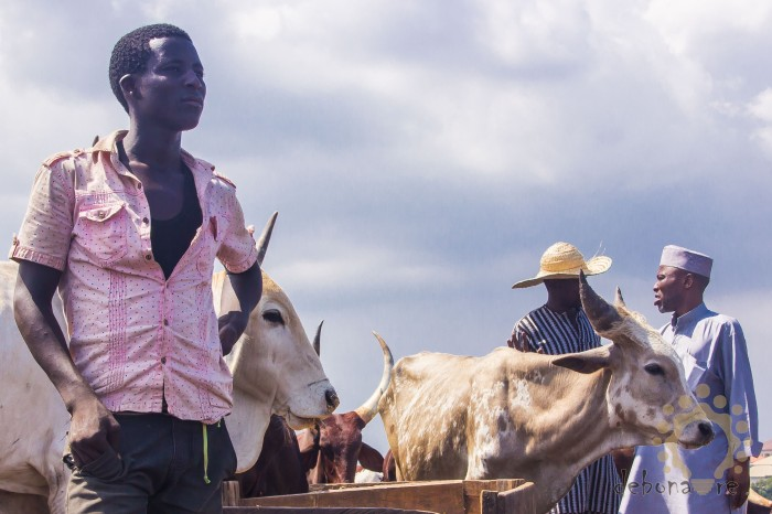 A herdsman stares ahead as price haggling goes on beside him